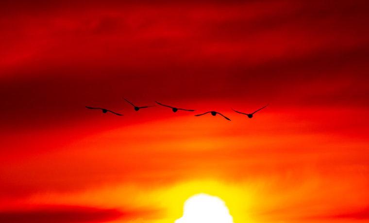 夕日に向かって羽ばたく鳥