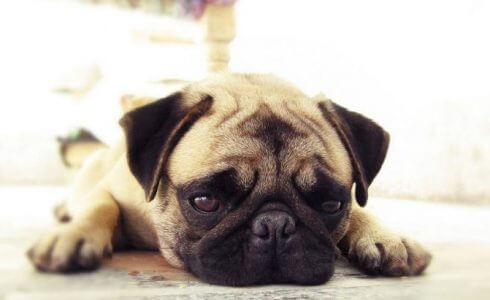 パブロフの犬|ブログ画像