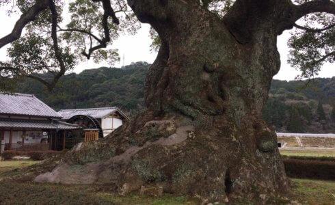 武雄の大楠の画像